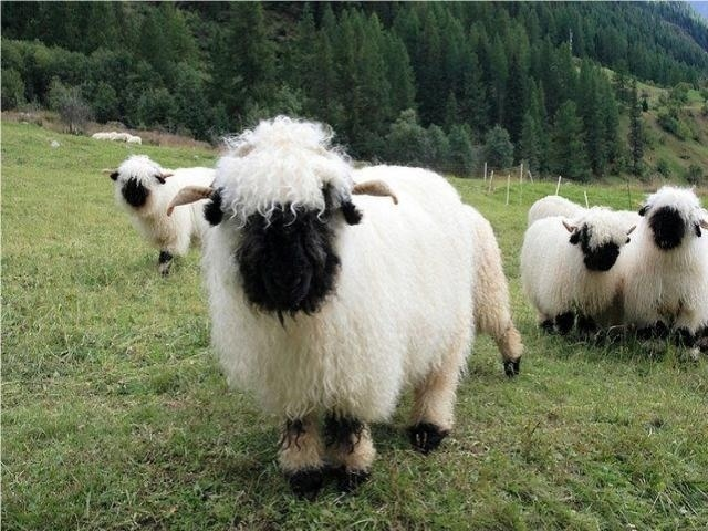 Spank or not to spank?  Children are like sheep easily led and vulnerable.